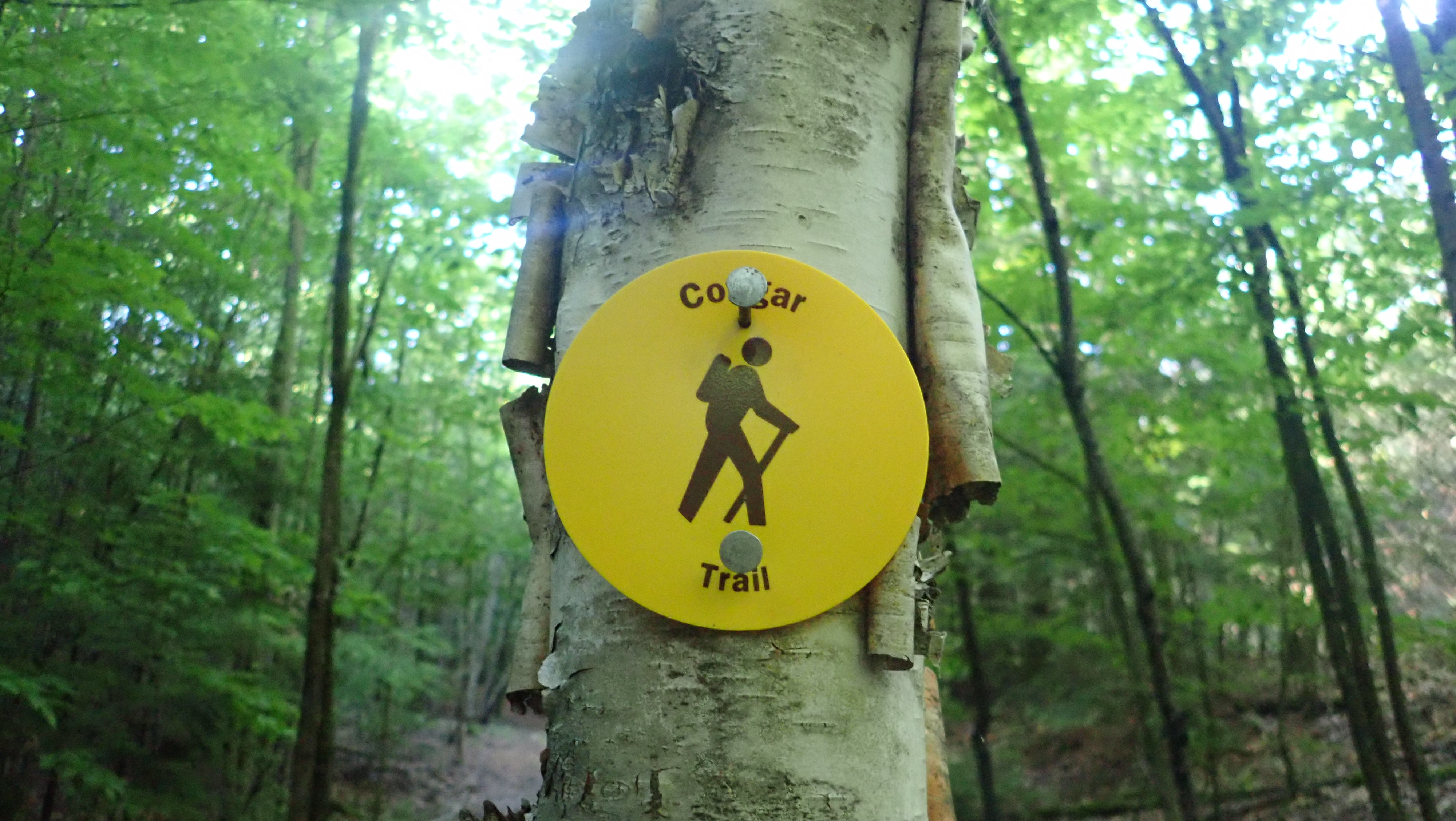 Cougar Nature Trails