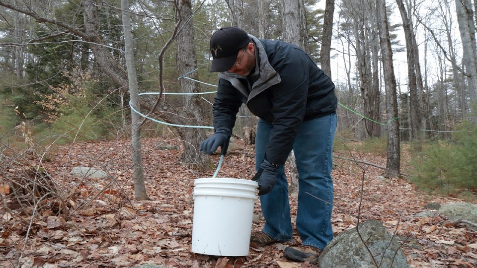 Peter from Up Yonda collecting sap