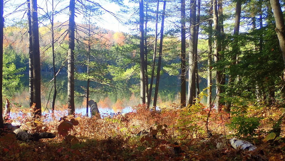 Palmer Pond hiking in the fall